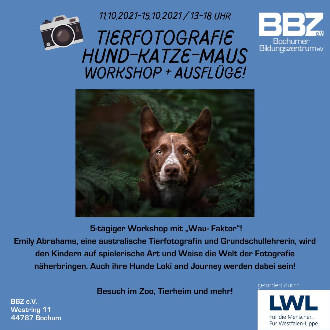 Tierfotografie Hund Katze Maus Workshop mit Ausflügen